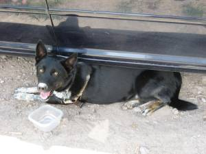 So tired and hot she had to hide under the car