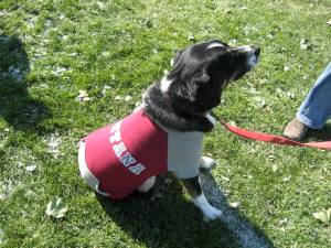 This pooch has spirit - how 'bout you?